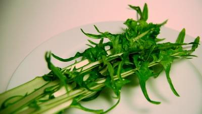 Chicory stalks2