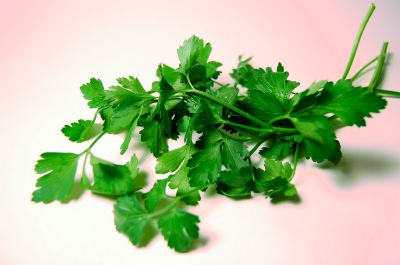 Flatleaf parsley2